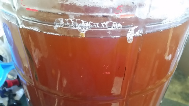Honey fuggle ale in the primary fermenter